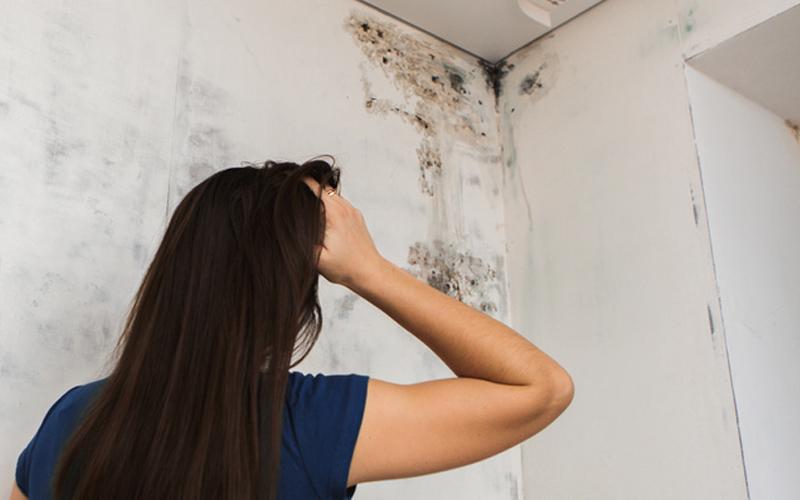 رفع نم ساختمان و سرویس ها